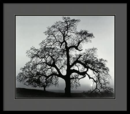 Framed Art Print, Oak Tree, Sunset City, California, 1962 by Ansel Adams Outer Size 29 x 25