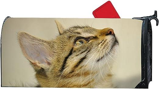 KSLIDS Caja de Maquillaje de Moda para Gatitos Jugando con Gatos y Fundas magnéticas para Yarda, casa, al Aire Libre: Amazon.es: Jardín