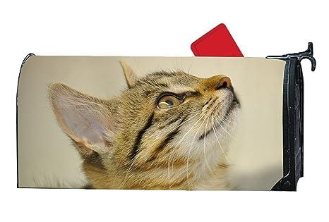 KSLIDS Caja de Maquillaje de Moda para Gatitos Jugando con Gatos y Fundas magnéticas para Yarda