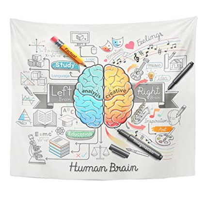 Emvency Tapestry Education Human Brain Diagram Doodles Style Psychology Creative Home Decor Wall Hanging For Living Room Bedroom Dorm 50x60 Inches