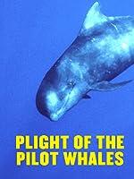 Amazon.com: Watch Blackfish | Prime Video - photo#25