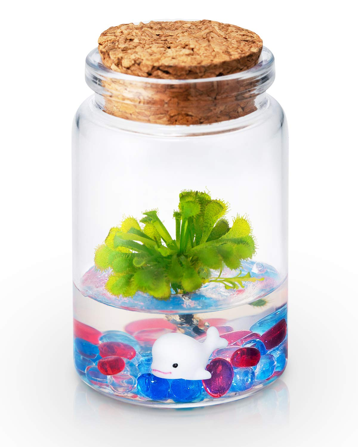 Bloomify Sundew Terrarium - 100% Self Sustaining Drosera spatulata in Maintenance Free Glass Jar with Unique Terra Gel, Fast and Healthy Plant Growth for Kids and Adults
