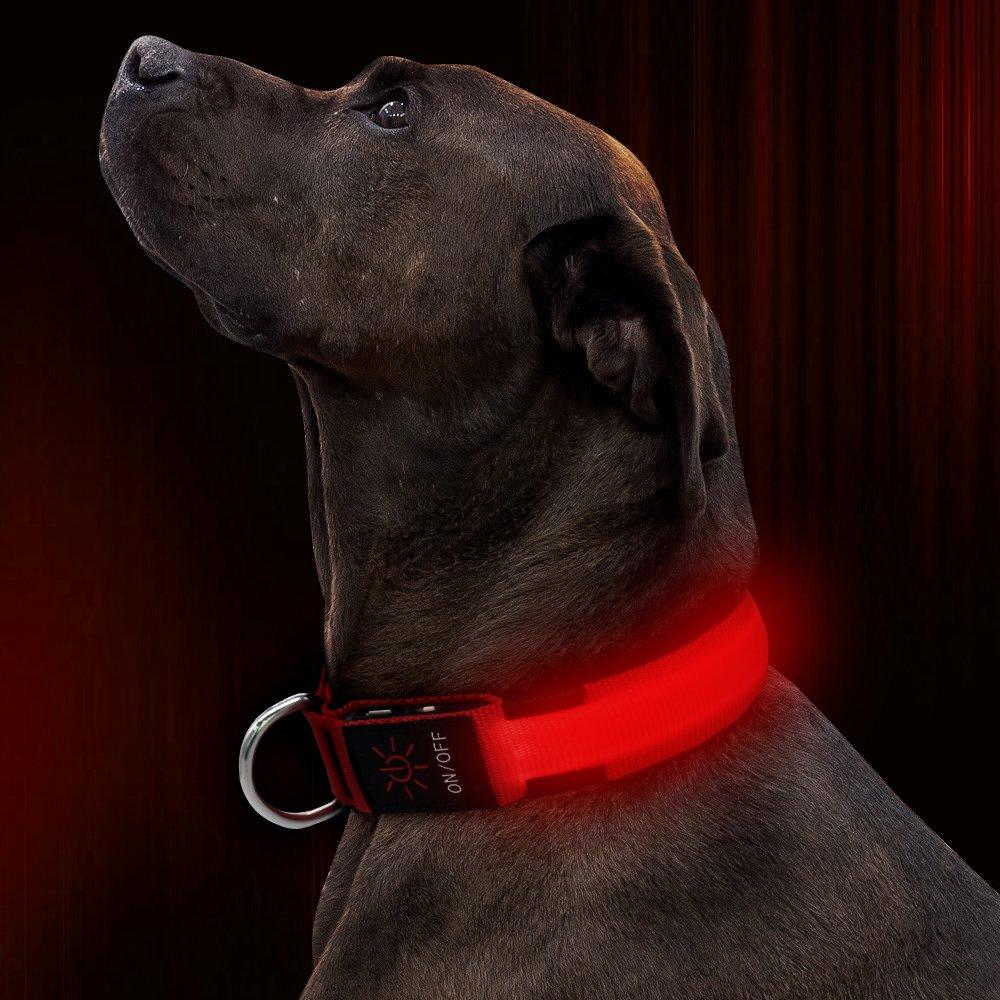 ویکالا · خرید  اصل اورجینال · خرید از آمازون · Illumifun LED Dog Collar, USB Rechargeable Light Up Dog Collar, Adjustable Nylon Webbing Glowing Safety Pet Collar Make Your Dogs Safe& Seen in The Dark(Red, Large) wekala · ویکالا