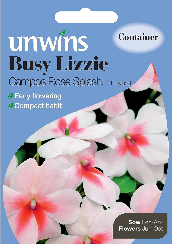 Westland Busy Lizzie Campos Rose Splash Seeds