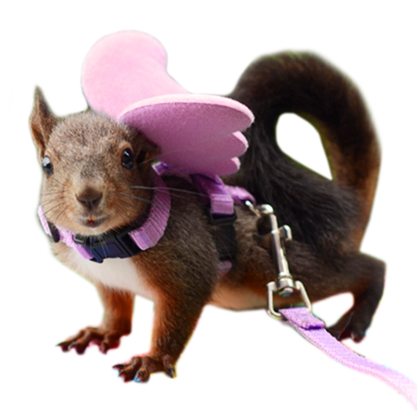 Alfie Pet by Petoga Couture - Tyler Harness and Leash Set for Small Animals like Mouse, Chinchilla, Rat, Gerbil and Dwarf Hamster - Color: Pink