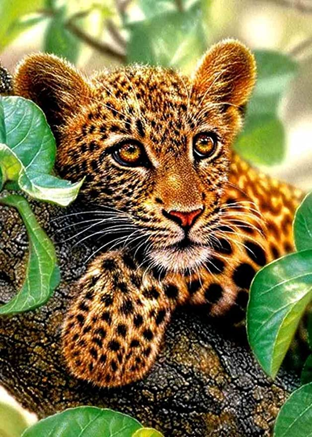 May Trees Paint by Numbers, DIY Painting by Numbers for Adults Kids Beginner - Leopard on Tree 16x20 inch (Frameless)
