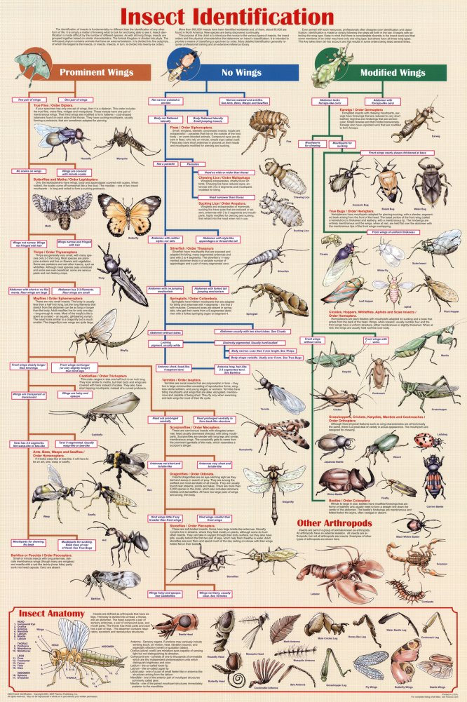 insects identification chart