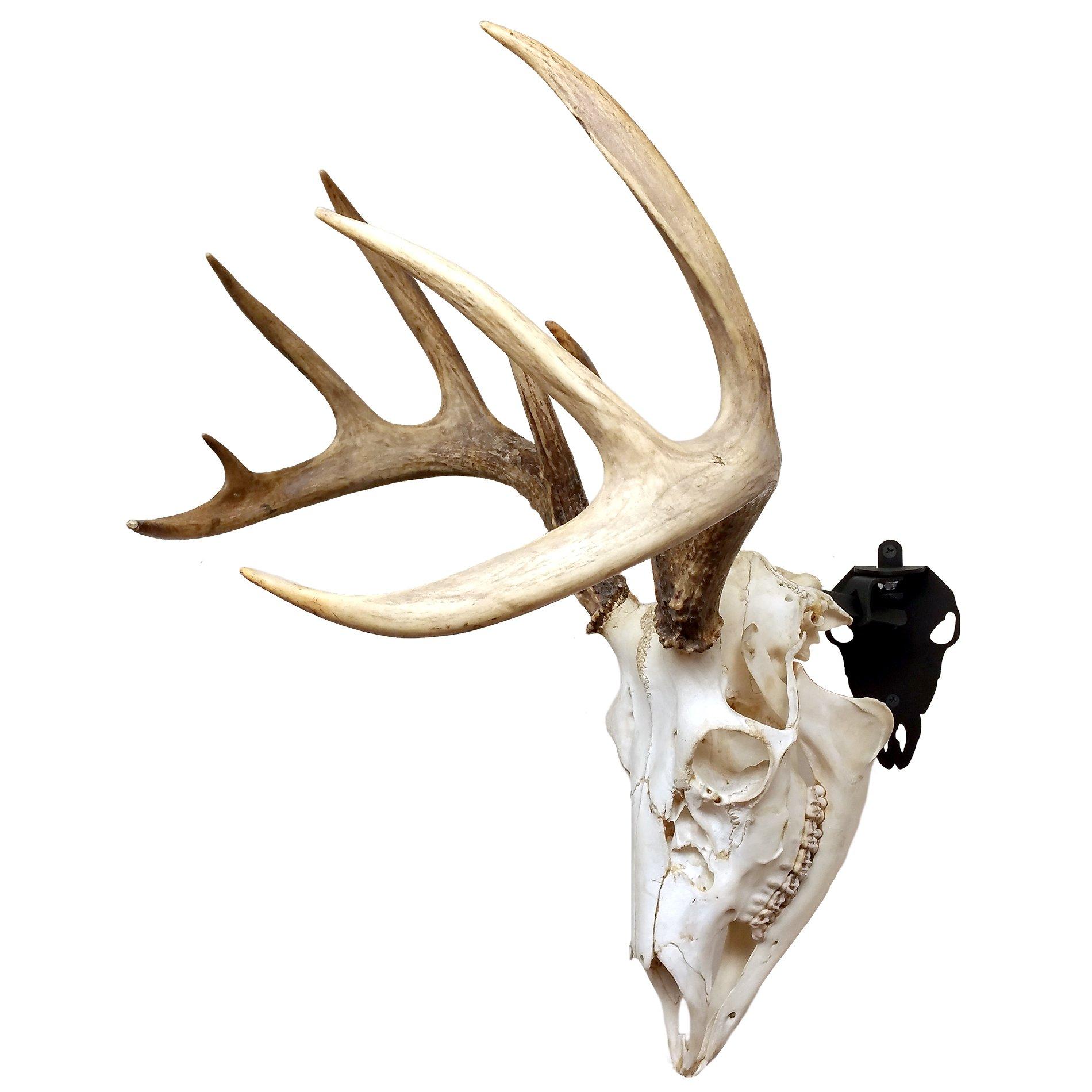 Herron Outdoors P123601 Skull Whitetail Style Mount, Black by Herron Outdoors (Image #2)
