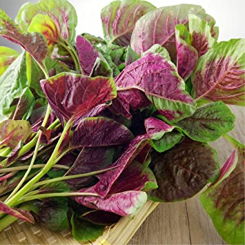 Leafy Greens Red Amaranth Seeds for Planting Outside Door Cooking Dish Soup Salad Taste Delicious 3000+(Red Amaranth Seeds): Amazon.ca: Patio, Lawn & Garden