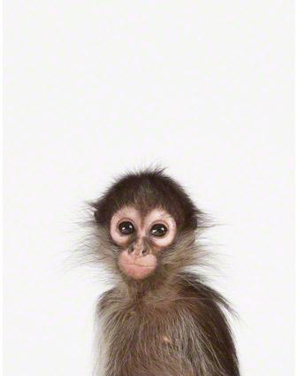 Baby Monkey Little Darling