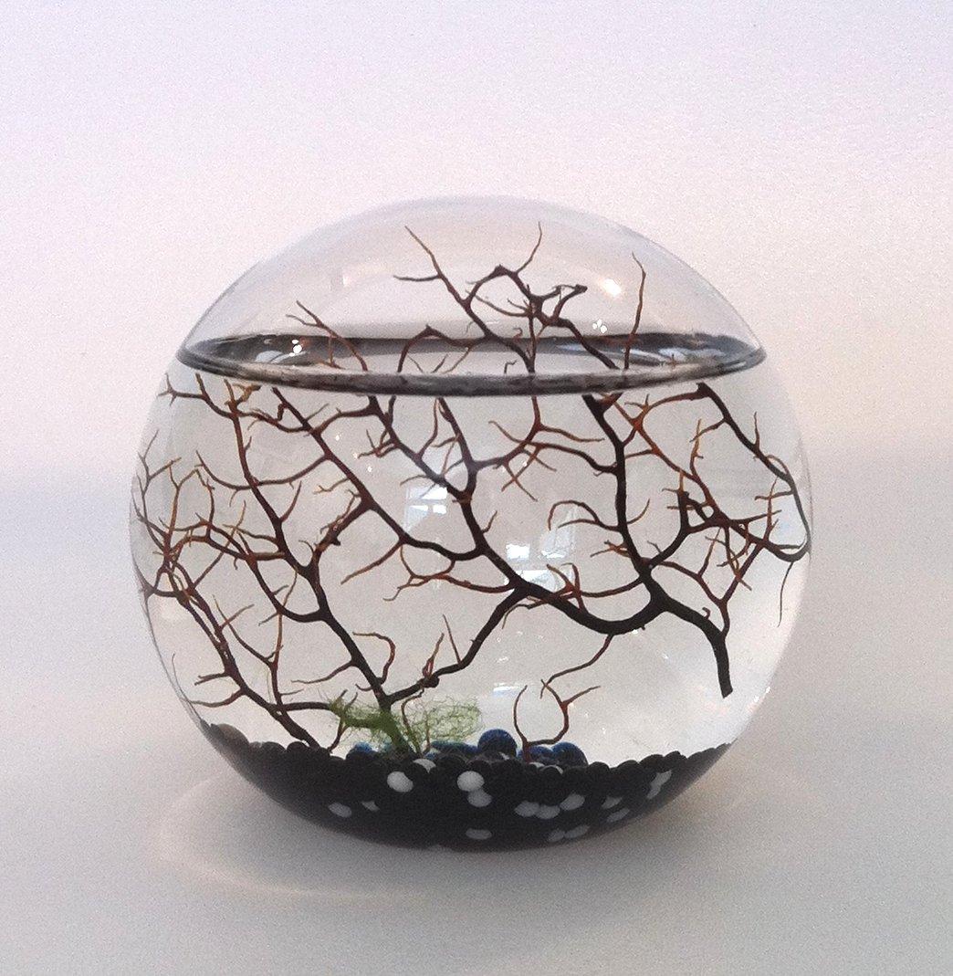 Original Ecosphere Kugel 13 cm schwarzer Kies !! Neu!! Miniaturwelt hinter Glas