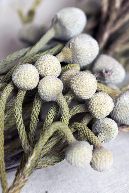 リッチランド自然Brunia Berriesシルバーバンドル 09053224579_06 B075KMRLQK  6