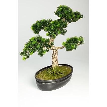 Decorativo bonsái pino japonés en cuenco para bonsais, 320 ápices, 40 cm - Bonsái