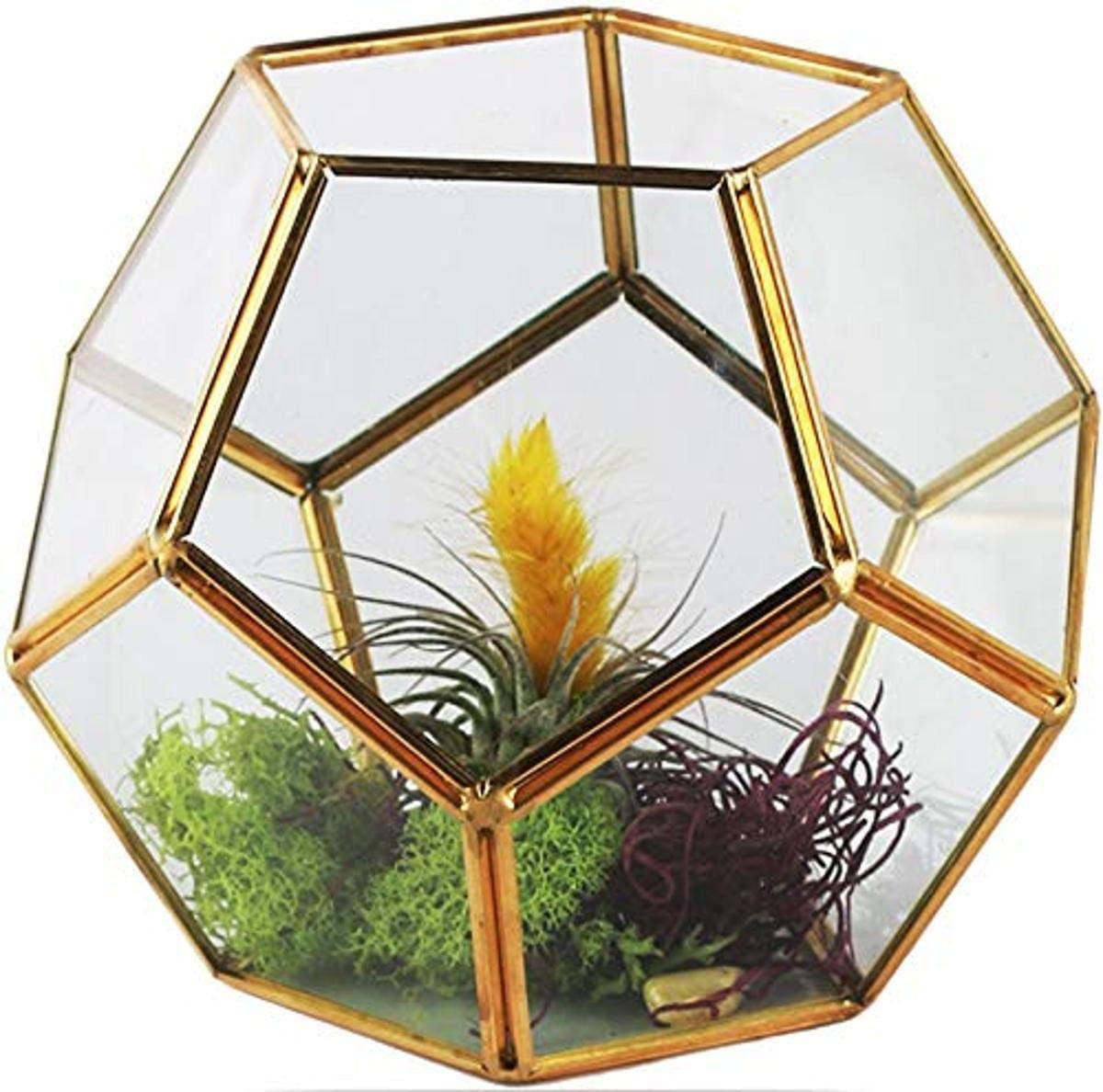 """Circleware Terraria Terrarium Clear-Glass Metal Frame Design Home Plant Decor Flower Balcony Display Box and Best Selling Garden Gifts, 7.09"""" x 5.5"""", Geometric-Gold-7.09x5.5"""