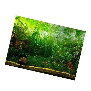 Sharplace Fondo Vivo Del Acuario, Adhesivo Póster Fish Tank Wall Decor Sticker - Waterweeds M: Amazon.es: Hogar