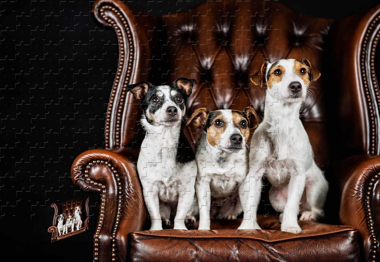 注目 PigBangbang、34.4 X 22.6インチ、バスウッド製 - - 3匹の犬座った椅子- B07HY9T1QP 1500ピースのジグソーパズル PigBangbang、34.4 B07HY9T1QP, チマチョゴリ韓服韓国雑貨Yumekobo:2aaa9ed3 --- sinefi.org.br