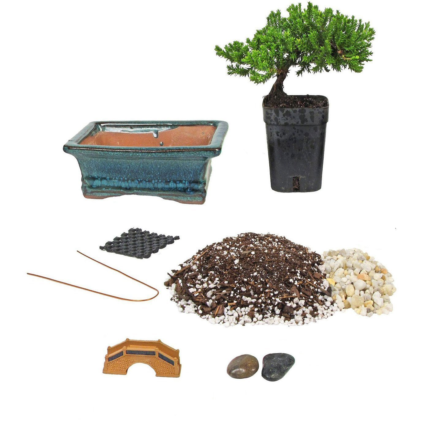 Bonsai Tree Starter Kit, Complete Do-It-Yourself Kit with 2 Year Old Petite Japanese Juniper from Jmbamboo by JM BAMBOO