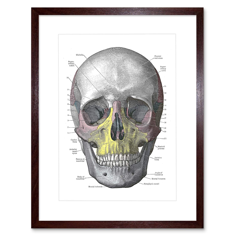 Amazon Painting Drawing Diagram Human Skull Bone Anatomy Black