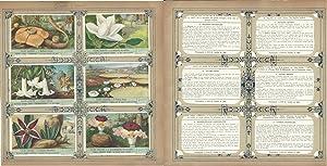 Liebig, Set 6 Cards, F1540, 1952, Giant Flowers, Magnolia, Arborea