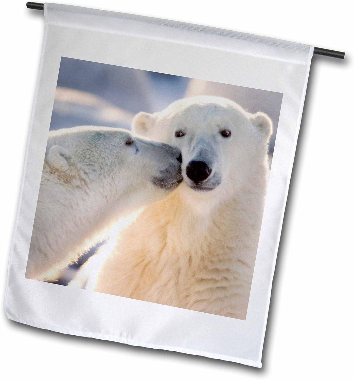 3dRose fl_70261_1 Canada, Manitoba, Hudson Bay, Churchill, Polar Bear-CN03 BJA0001-Janyes Gallery Garden Flag, 12 by 18-Inch
