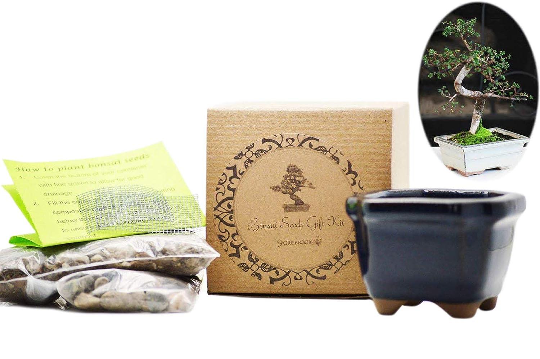 Amazon Com 9greenbox Bonsai Seed Kit Chinese Elm Live Indoor Bonsai Plants Grocery Gourmet Food