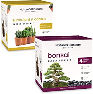 Nature's Blossom Succulents and Cacti Seed Kit and Nature's Blossom Bonsai Tree Kit