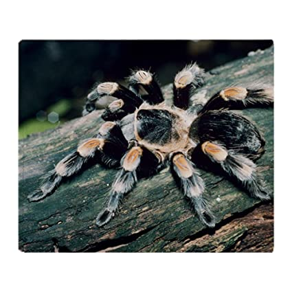 Image Unavailable Not Available For Color CafePress Mexican Redknee Tarantula