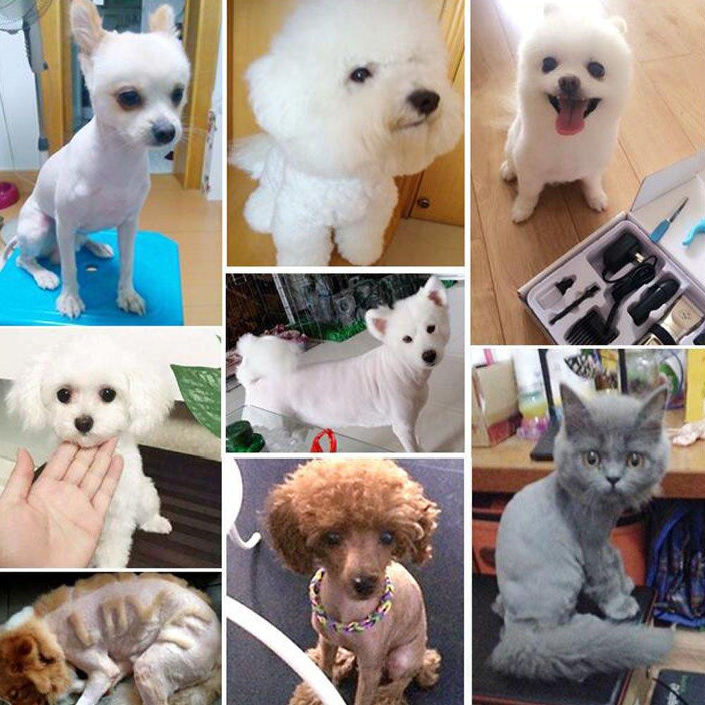 Home-Neat cerámica Cortapelos para animales (Perros Gatos Esquiladora Animales - Máquina de Cortar Pelo Mascotas Trimmer afeitadora tiersc herm aschine con ...