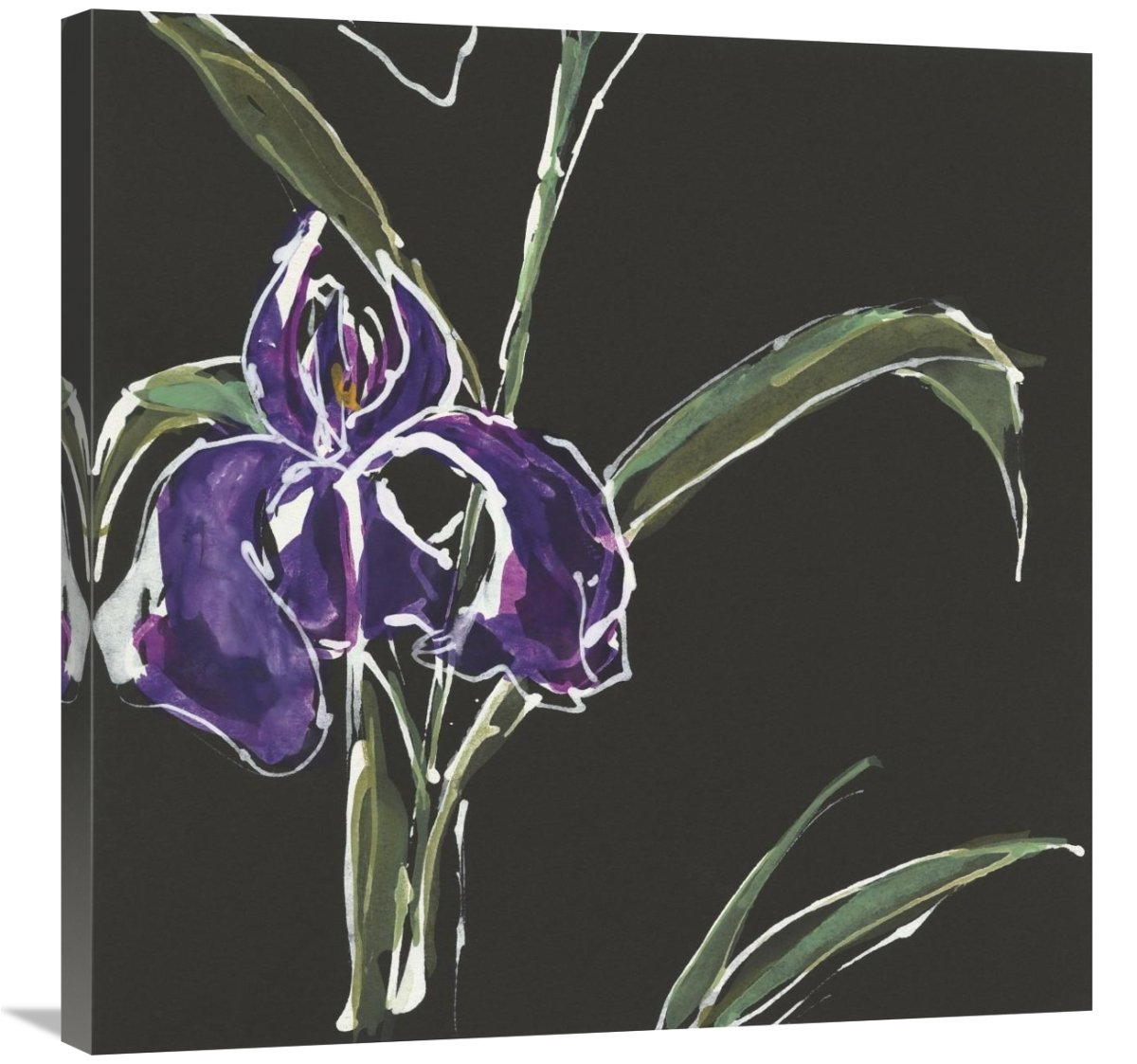 Global Gallery Chris Paschke Iris on Black II Canvas Artwork 30 x 30