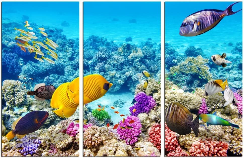 Amazon Com Sechars 3 Piece Underwater Wall Art Tropical Coral Fish Pictures Print Blue Ocean Canvas Art Gallery Wrapped Modern Home Bedroom Bathroom Artwork Posters Prints
