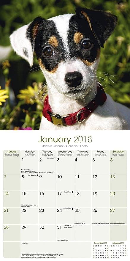 Calendario de pared 2018 Avonside con diseño de perro Jack Russell Terrier, cuadrado y sellado de fábrica: Amazon.es: Productos para mascotas