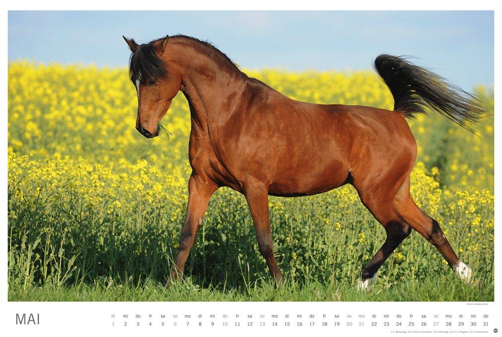 Pferde - Meine Freunde - Kalender 2018 Kalender – 16. Mai 2017 ...