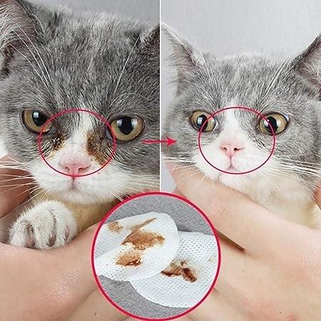 AchidistviQ Toallitas húmedas para Limpieza de Ojos y Gatos, 100 Unidades, de la Marca: Amazon.es: Hogar