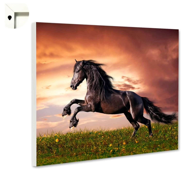 Magnettafel Pinnwand Pferde Schimmel Herde Galopp Gr/ö/ße 60 x 40 cm