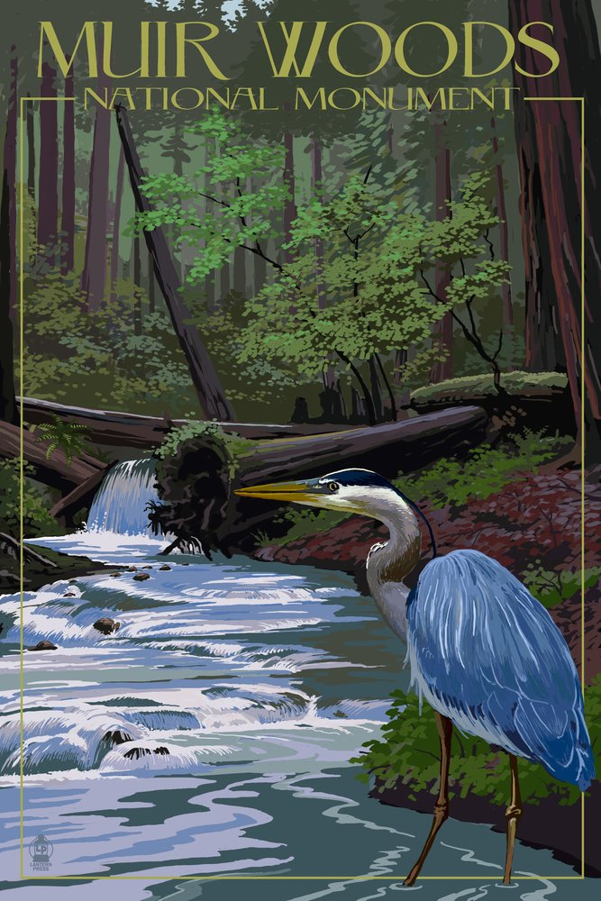 高価値セリー Muir Muir Woods Print National Monument Giclee、カリフォルニア – ブルーHeron 12 x 18 Metal Sign LANT-36761-12x18M B017E9WUSE 36 x 54 Giclee Print 36 x 54 Giclee Print, TOWA-zakka:1df5ab9b --- 4x4.lt