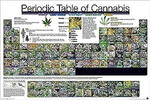 Buyartforless Periodic Table of Cannabis (Weed Marijuana Table) 36x24 Art Print Poster Novelty Drug Smoking Humor