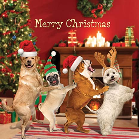 Single At Christmas.Xmas Dog Conga Single Christmas Card