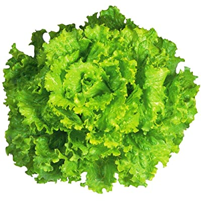 """Arianna Romaine"" Lettuce Seeds, 1000+ Premium Organic Heirloom Seeds, Batavian Lettuce, ON SALE!, (Isla's Garden Seeds), Non Gmo Survival Seeds, 99.7% Purity, 85% Germination, Highest Quality! : Garden & Outdoor"