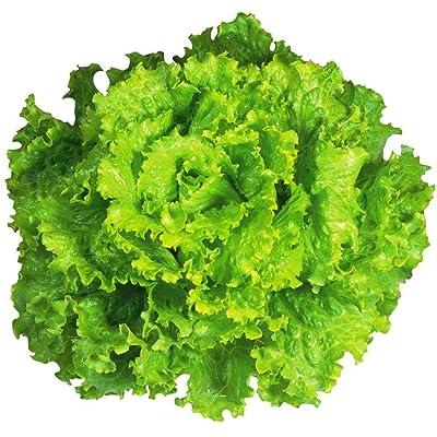 """Arianna Romaine"" Lettuce Seeds, 1000+ Premium Organic Heirloom Seeds, Batavian Lettuce, ON SALE!, (Isla's Garden Seeds), Non Gmo Survival Seeds, 99.7% Purity, 85% Germination, Highest Quality! : Garden & Outdoor"