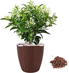 Dooreemee Cordate Telosma Plant,DIY Mini Lazy Flower Pot, Automatic Water Absorption Funny Potted Plant with high Grade for Cultivating Kid's Planting Hobbies and Decorating Home & Office