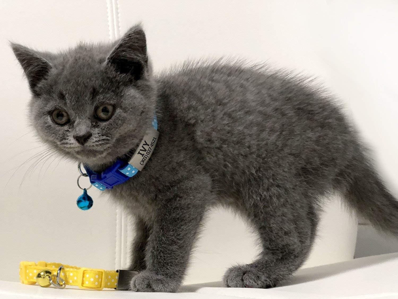TagME Collares de Gato Personalizados con Placa de Nombre/Collares de Perro pequeños con Nombre, número de teléfono, número de Microchip/Patrón de Polca/Azul: Amazon.es: Oficina y papelería
