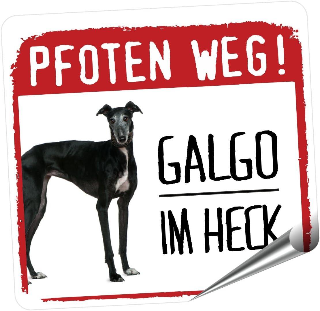 Galgo Pfoten Weg Kleiner Hundeaufkleber Reflektierend Reflective Siviwonder Auto Aufkleber Galgos Español Auto