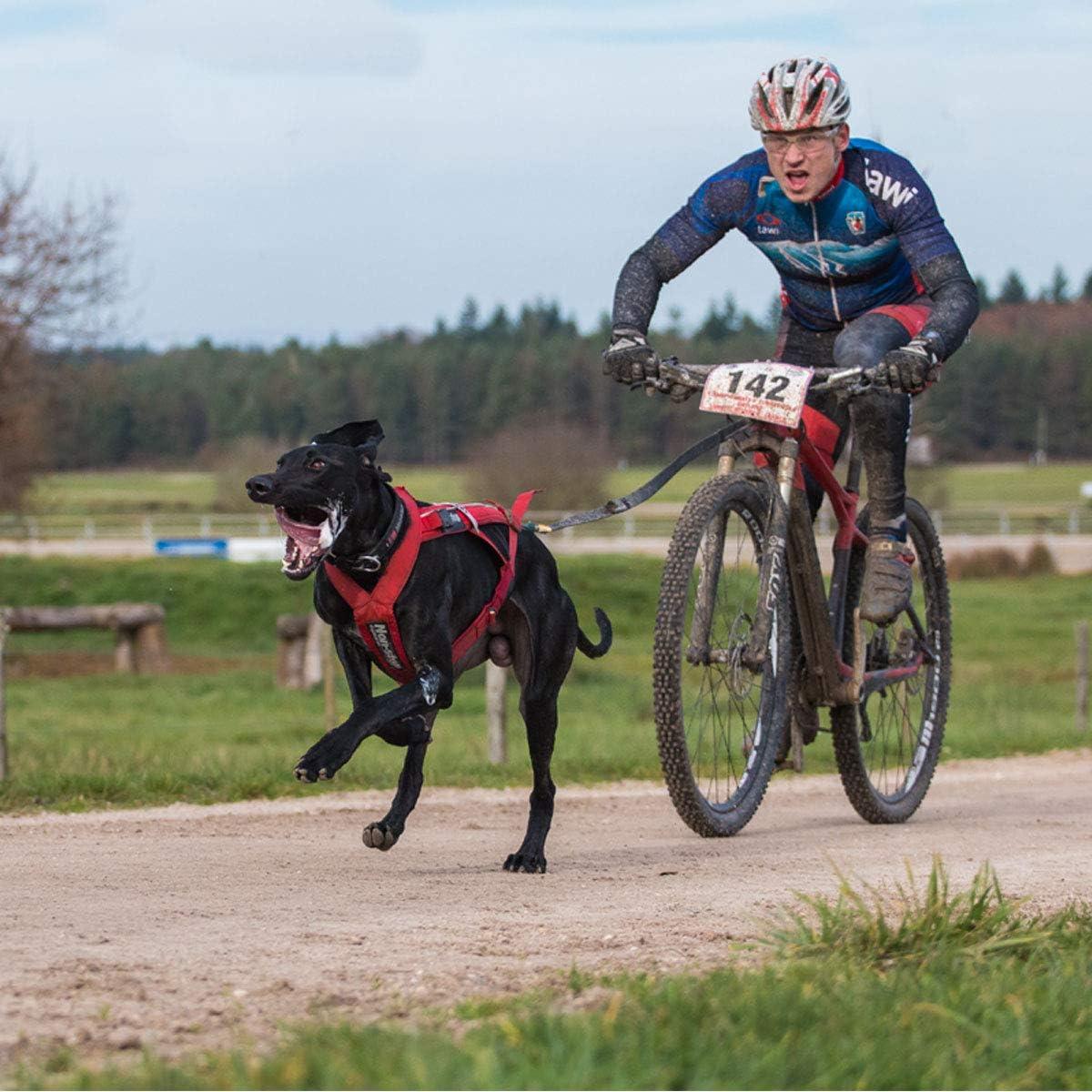 Non-Stop dogwear - Antena para Bici - Talla Unica: Amazon.es ...