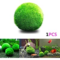 angju - [Bolas de musgo] para acuario para plantas vivas, bola de musgo