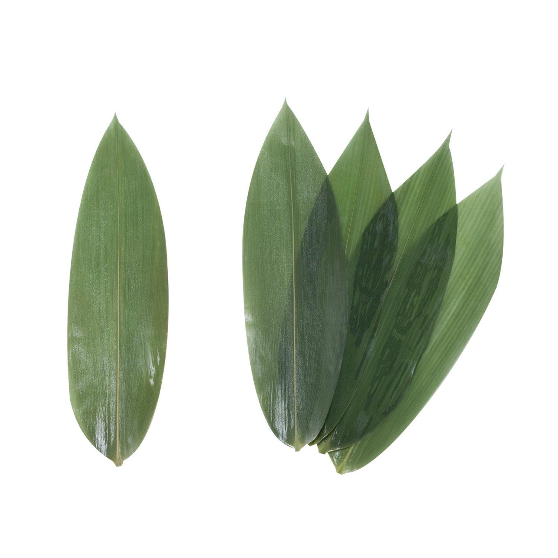 500, 12L x 3.5W Korin Vacuum-Packed Bamboo Leaves 12L x 3.5W 100pcs//pack