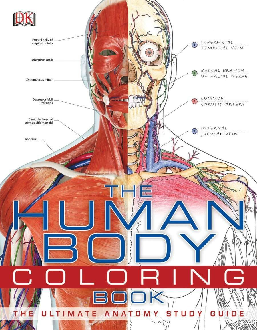 The Human Body Coloring Book The Ultimate Anatomy Study Guide