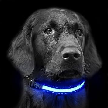 Focuspet Led Halsband Hund Leuchtendes Halsband Led Hundehalsband Usb Und Solarenergie Aufladba Nacht Hundeband Einstellbarer Halsumfang Sicherheits