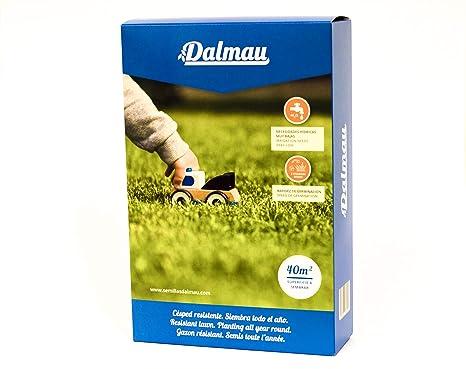 Semillas de Césped - LOLIUM PERENNE CT7-1 kg - Raygrass o césped inglés, mantenimiento medio - Dalmau