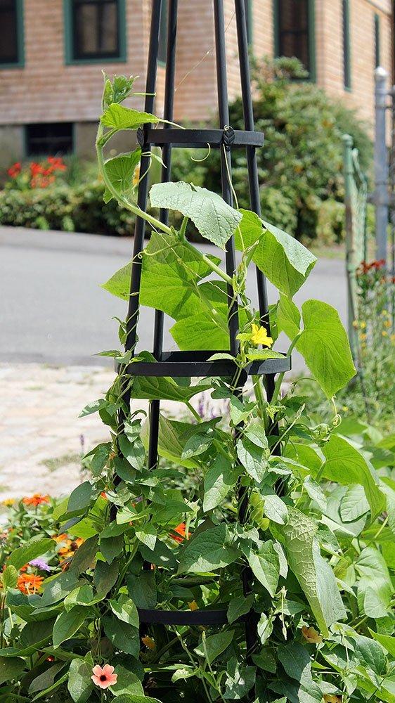 Achla Designs OBL-01, 61-in Wrought Iron Garden Obelisk Trellis, H, Graphite