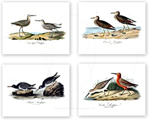 "Sea Birds Beach Wall Art Decor Set of 4 Unframed 8x10"" Prints Coastal Home Decor by Gnosis Picture Archive"
